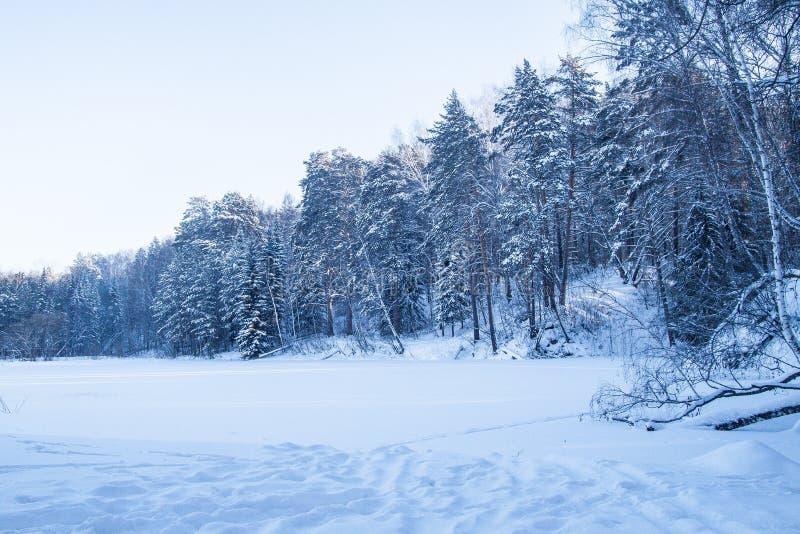 Paesaggio nevoso della foresta di inverno fotografia stock