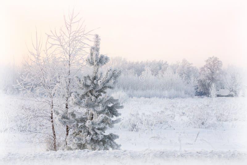 Paesaggio nevoso di bello inverno con il fuoco selettivo della casa e dell'albero fotografia stock