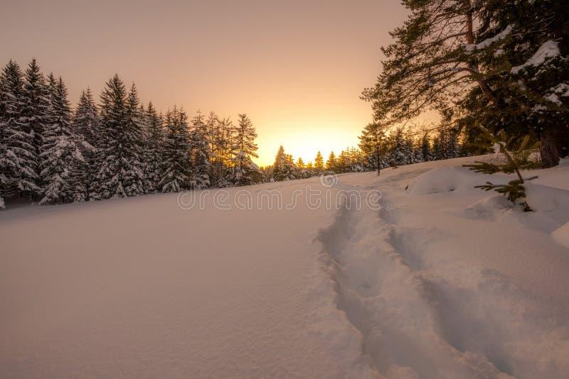 Paesaggio nevoso di inverno fotografia stock