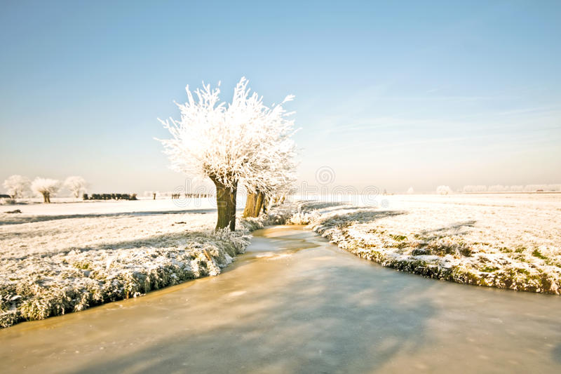 Paesaggio olandese rurale tipico in inverno immagini stock libere da diritti