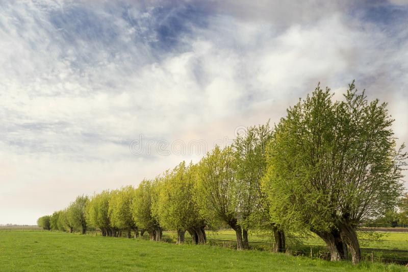 Paesaggio olandese tipico con il prato verde, l'erba, una fila dei salici e un cielo blu con le nuvole fotografia stock