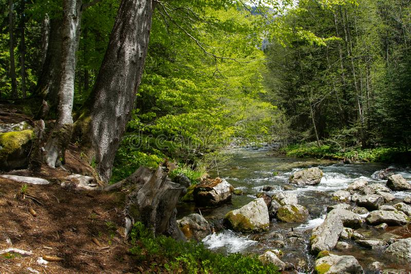Paesaggio pacifico della foresta con i piccoli salti in serie sopra le rocce muscose immagine stock libera da diritti