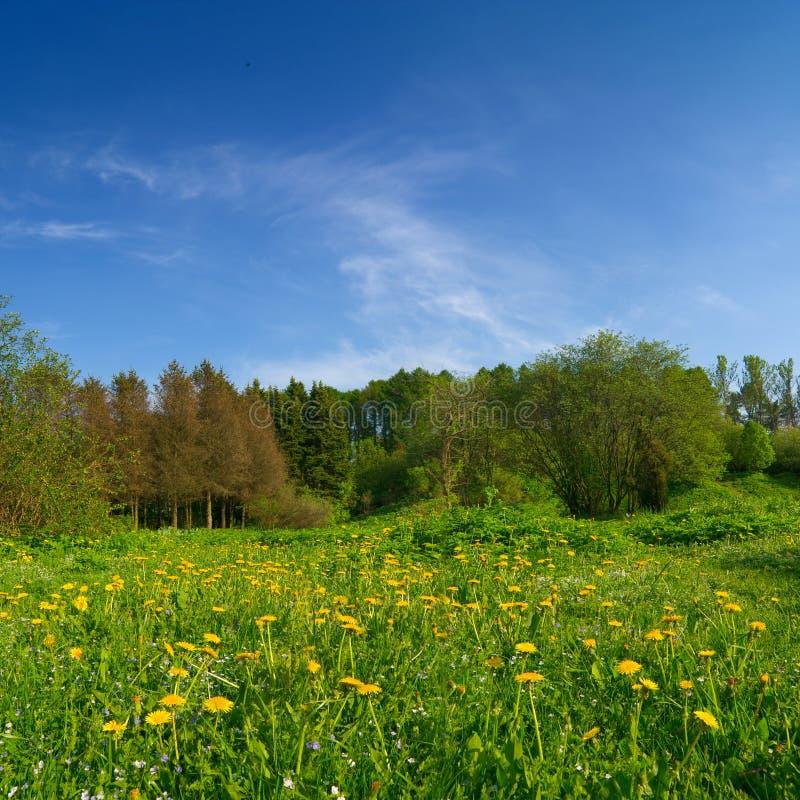 Paesaggio pacifico di estate fotografie stock libere da diritti