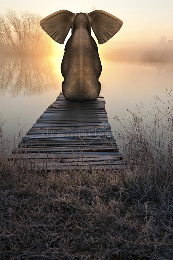 Paesaggio pacifico di tramonto di alba dell'elefante fotografia stock libera da diritti