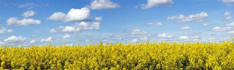 Paesaggio panoramico del giacimento del seme di ravizzone fotografie stock