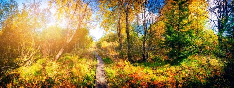 Paesaggio panoramico di autunno con il percorso del paese immagini stock libere da diritti