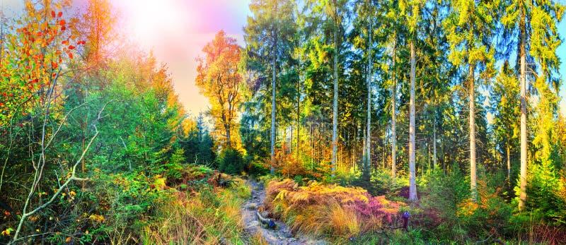 Paesaggio panoramico di autunno con il sentiero nel bosco immagini stock libere da diritti