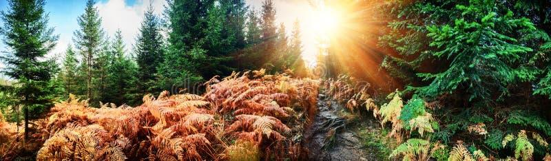 Paesaggio panoramico di autunno con il sentiero nel bosco fotografie stock