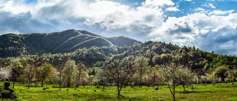 Paesaggio panoramico vistoso con erba verde, le colline e gli alberi, tempo soleggiato, cielo nuvoloso immagini stock libere da diritti