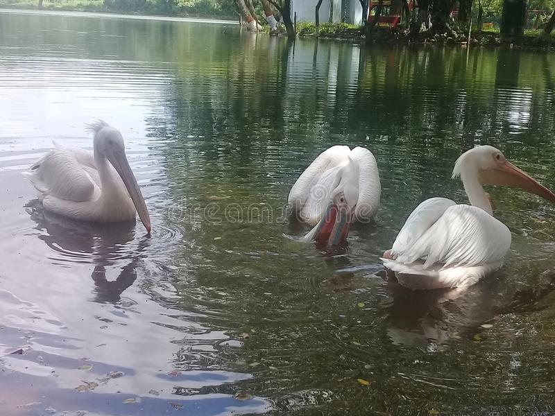 Paesaggio piacevole in uccello acquatico fotografie stock libere da diritti