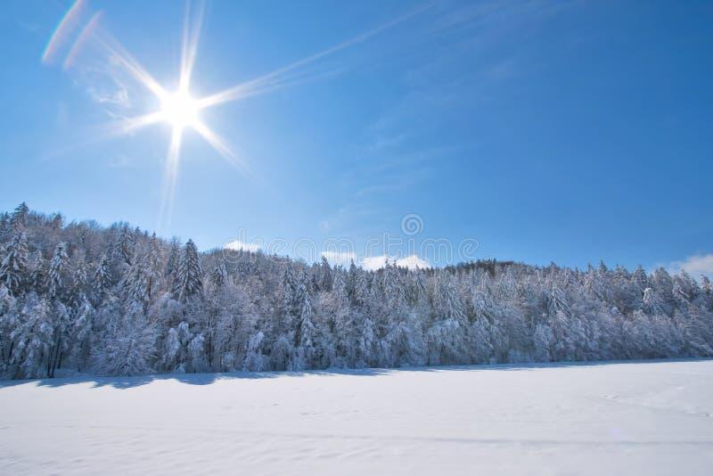 Paesaggio pieno di sole della neve fotografia stock libera da diritti