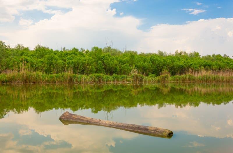 Paesaggio pittoresco con il lago e la foresta fotografia stock libera da diritti