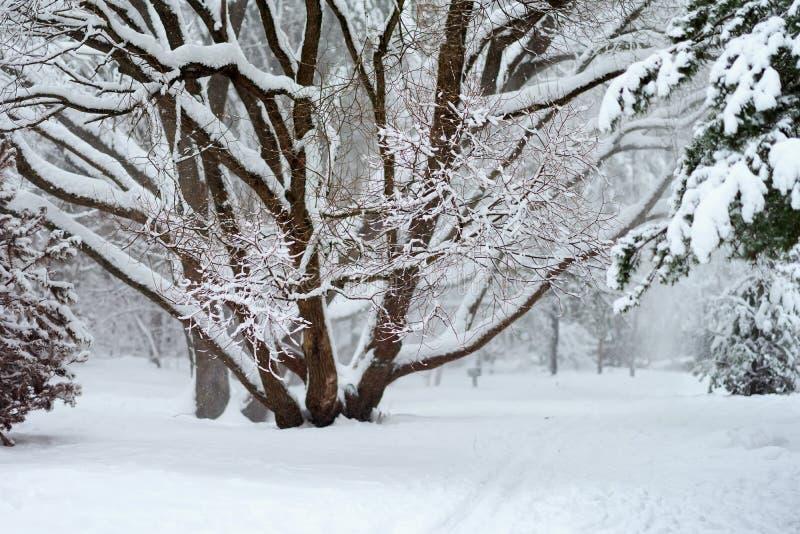 Paesaggio pittoresco di inverno di una foresta con differenti alberi coperti di neve fotografie stock libere da diritti