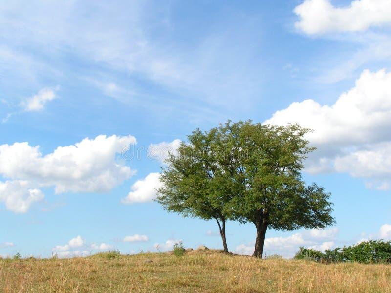 Paesaggio In Polonia Del Nord Immagini Stock Gratis