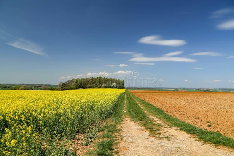 Paesaggio primaverile con campi di colza gialli brillanti fotografia stock libera da diritti