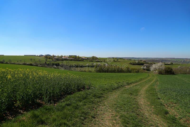 Paesaggio primaverile con campi verdi e prati fotografia stock libera da diritti