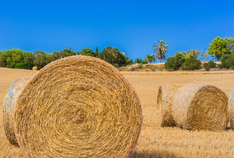 Paesaggio raccolto del giacimento di cereale con i rotoli della paglia fotografia stock