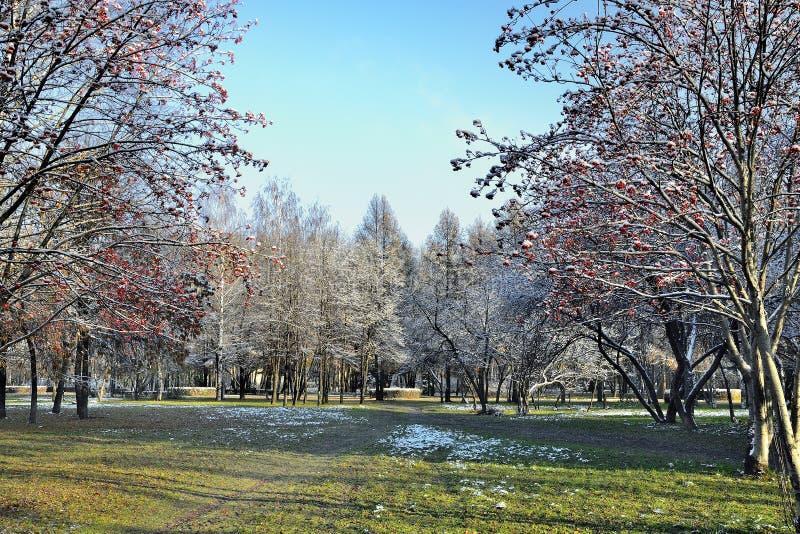 Paesaggio recente di autunno nel parco della città al giorno soleggiato fotografia stock