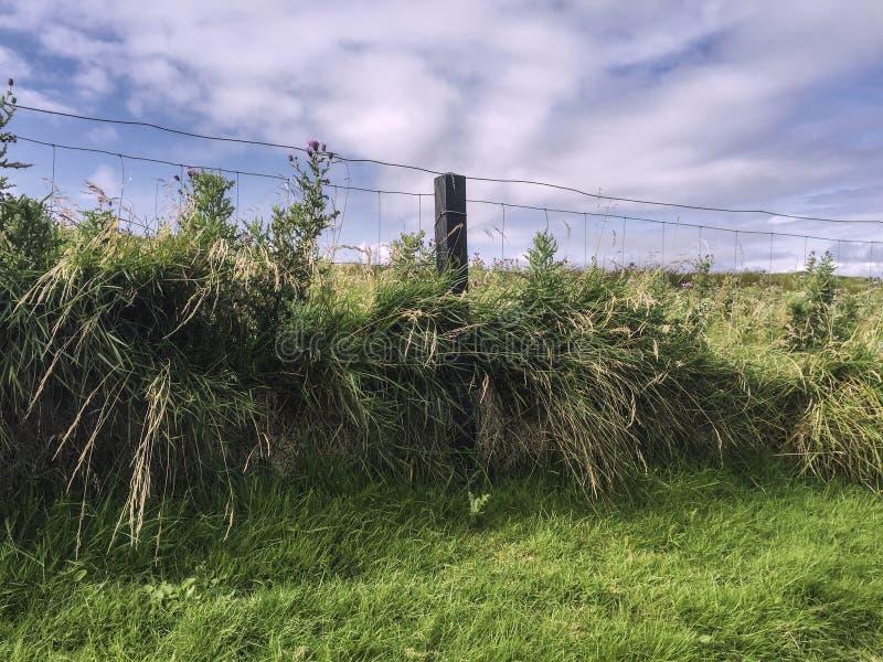 Paesaggio recintato in contea Mayo, Irlanda occidentale fotografia stock libera da diritti