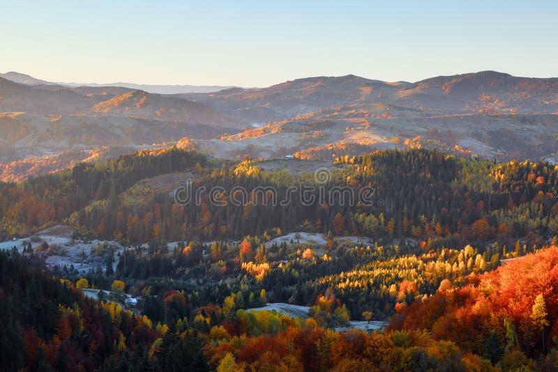 Paesaggio rurale autunnale Paesaggio con montagne, campi e foreste Ci sono alberi sul prato pieni di foglie d'arancia immagini stock libere da diritti