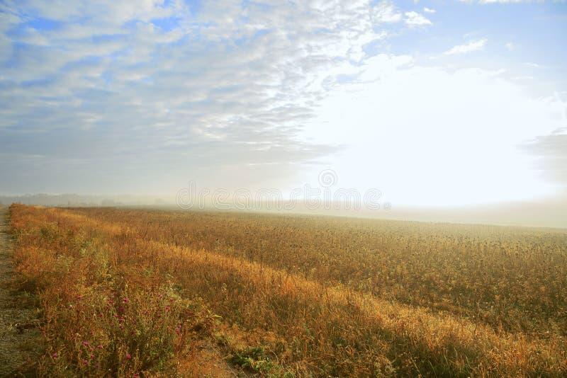 Paesaggio rurale autunnale nebbia all'alba in un campo d'oro giallo al sole in un caldo giorno di ottobre al mattino contro fotografia stock libera da diritti