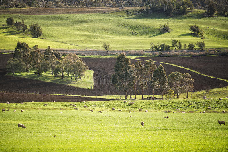 Paesaggio rurale Colebrook Tasmania fotografie stock libere da diritti