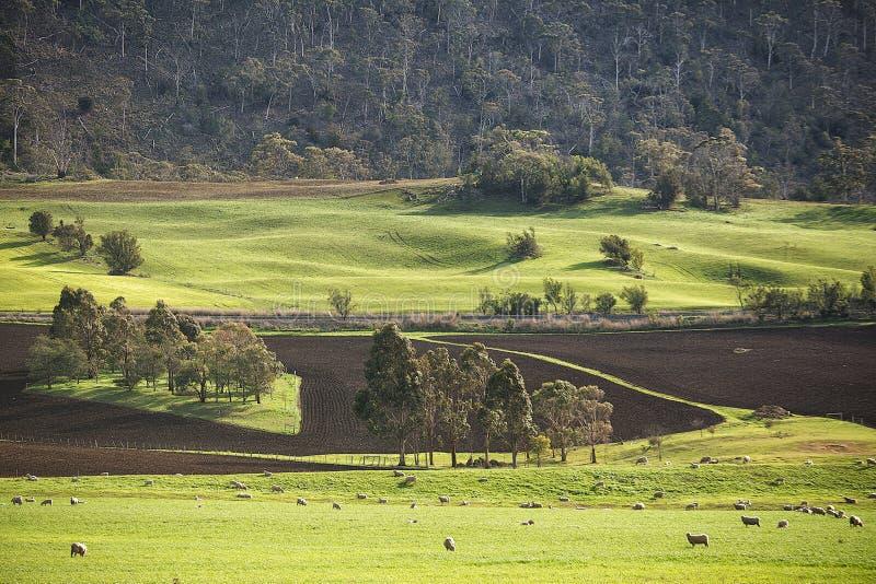 Paesaggio rurale Colebrook Tasmania immagini stock