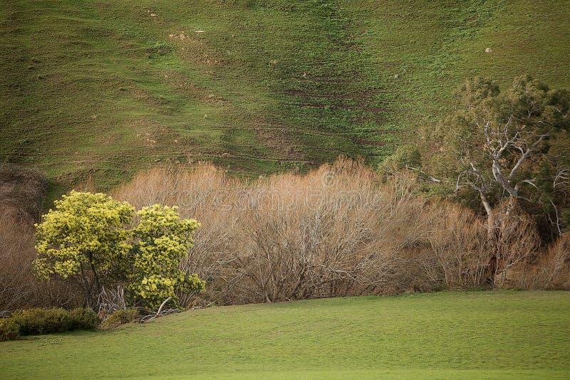 Paesaggio rurale Colebrook Tasmania fotografie stock