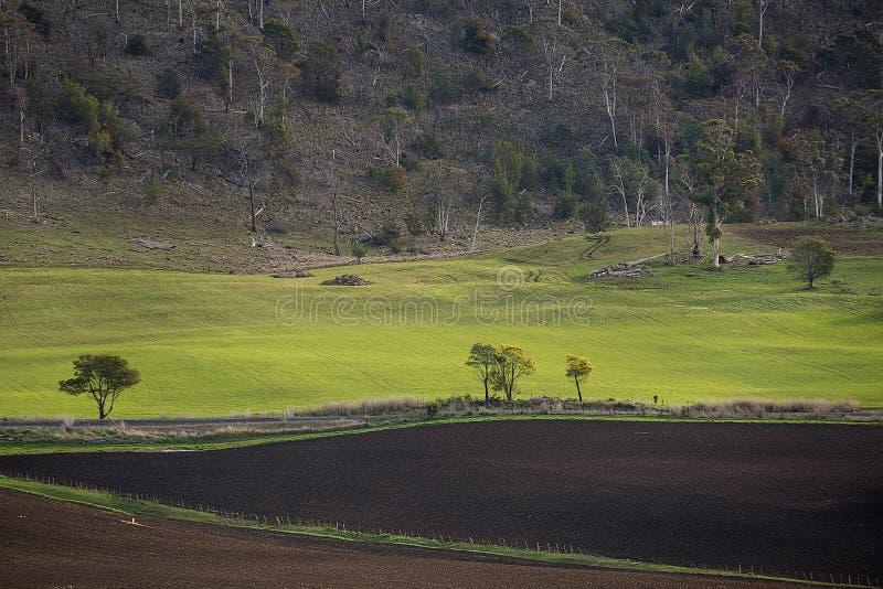 Paesaggio rurale Colebrook Tasmania fotografia stock libera da diritti