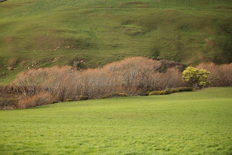 Paesaggio rurale Colebrook Tasmania fotografia stock