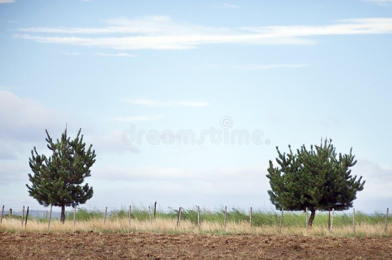Paesaggio rurale con due alberi fotografia stock libera da diritti