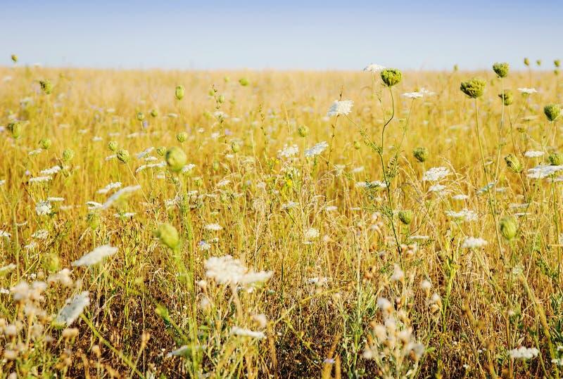 Paesaggio rurale con il bello campo giallo fotografia stock