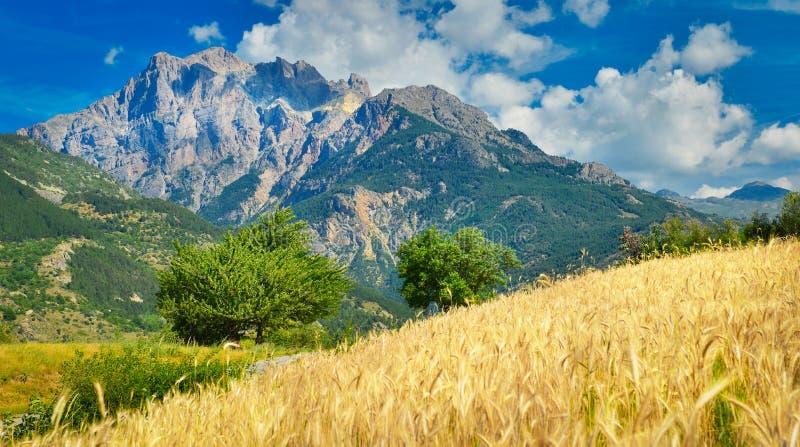 Paesaggio rurale con il giacimento di grano, Provenza, Francia fotografie stock