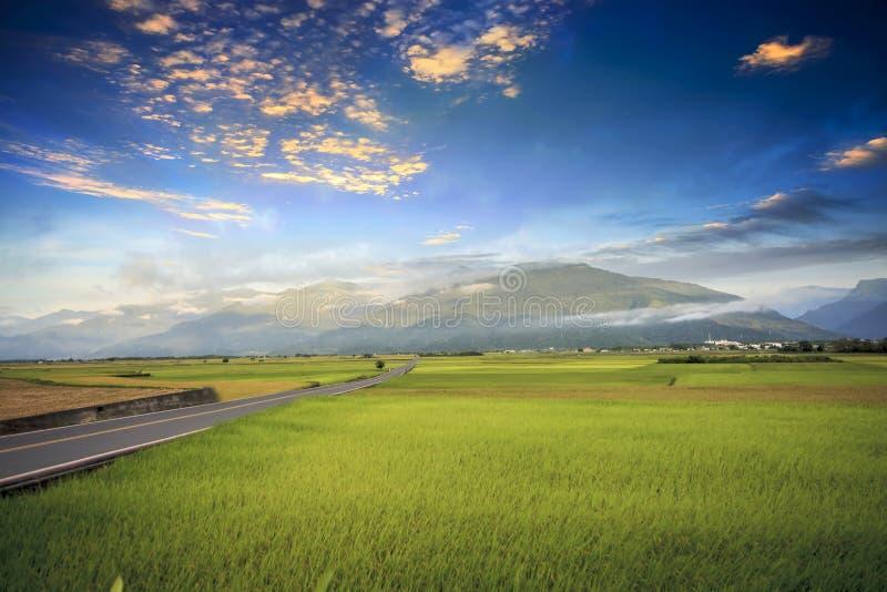 Paesaggio rurale con l'azienda agricola dorata del risone a Luye, Taitung, Taiwan immagini stock