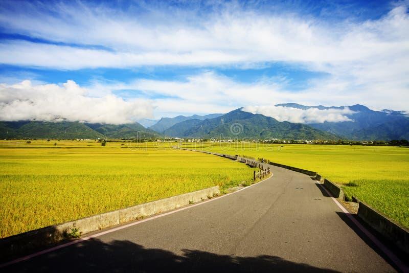 Paesaggio rurale con l'azienda agricola dorata del risone a Luye, Taitung, Taiwan fotografia stock libera da diritti