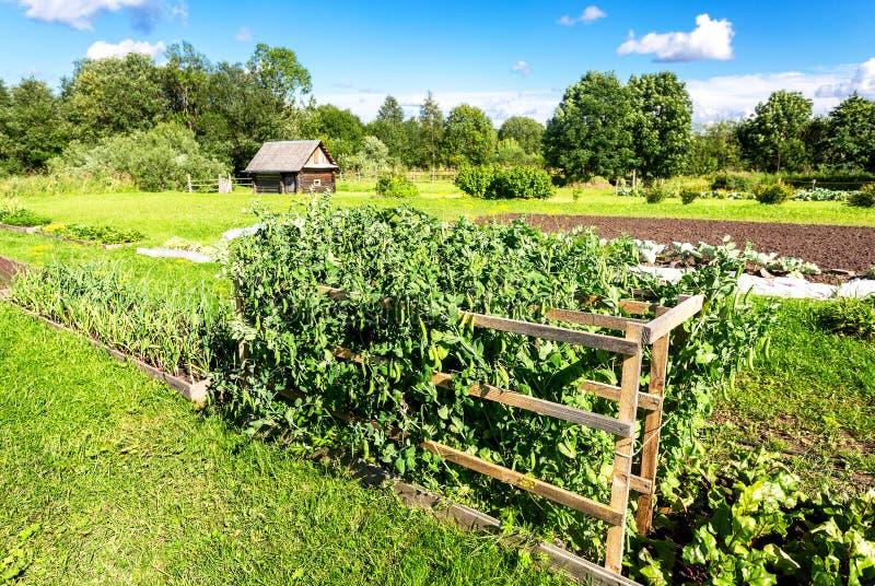 Paesaggio rurale con l'orto organico fotografia stock libera da diritti