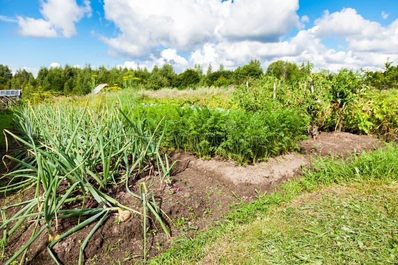 Paesaggio rurale con l'orto organico nel giorno di estate fotografia stock libera da diritti