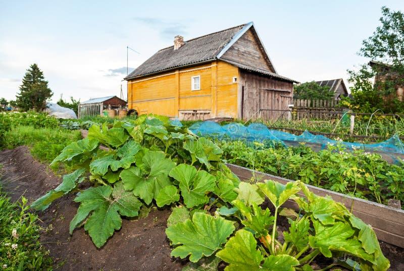Paesaggio rurale con la piccola casa di legno e l 39 orto for Schizzo di piccola casa