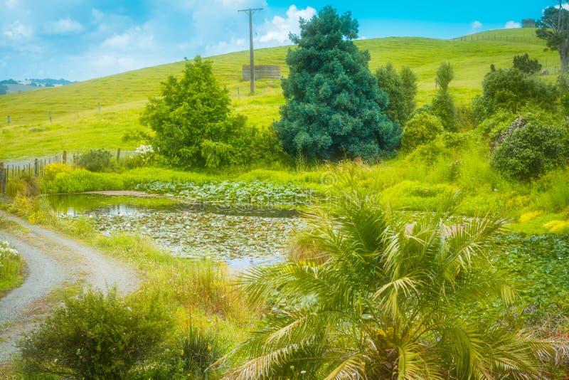 Paesaggio rurale con la strada della ghiaia che avvolge lo stagno passato del giglio verso Rolling Hills verde fertile fotografie stock libere da diritti