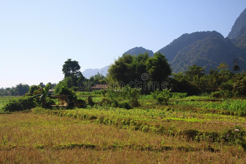 Paesaggio rurale con le montagne del campo e di morfologia carsica del raccolto - Vang Vieng, Laos immagini stock libere da diritti