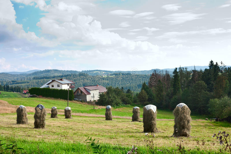 Paesaggio rurale con le pile di fieno falciato contro lo sfondo delle montagne Carpathians occidentali immagini stock libere da diritti