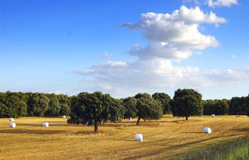 Paesaggio rurale della natura pittoresca con i campi fotografia stock