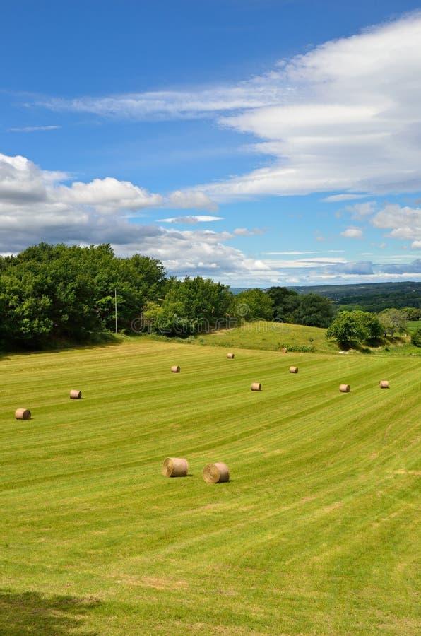 Paesaggio rurale della Provenza fotografia stock libera da diritti