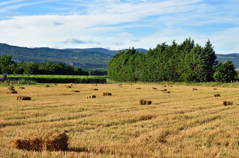 Paesaggio rurale della Provenza, Francia fotografia stock libera da diritti