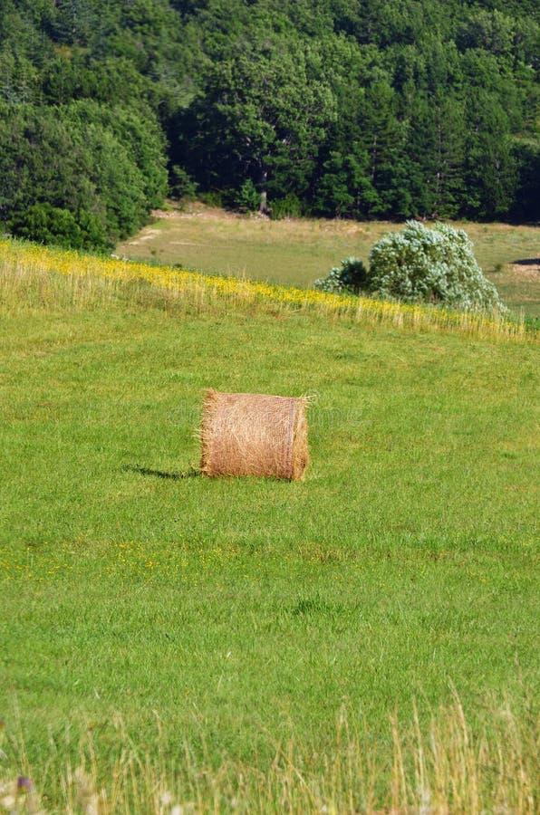 Paesaggio rurale della Provenza, Francia fotografie stock libere da diritti