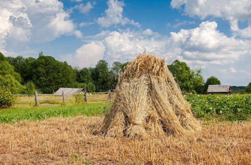 Paesaggio rurale di estate nel giorno di estate fotografia stock libera da diritti