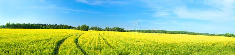 Paesaggio rurale di estate un panorama con un campo giallo fotografie stock