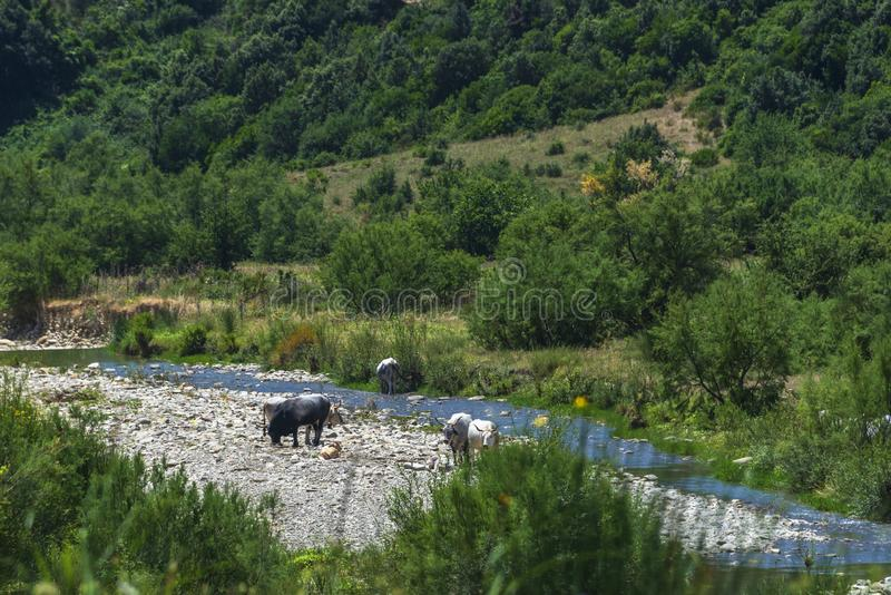 "Paesaggio rurale di estate in Val d ""Agri, Basilicata fotografia stock libera da diritti"