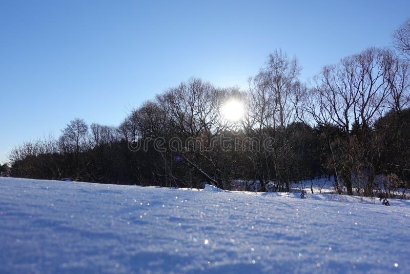 Paesaggio rurale di inverno con una neve del campo ed il cielo blu Sole basso di inverno immagine stock