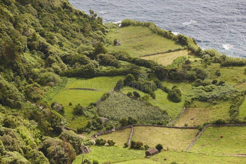 Paesaggio rurale di verde della linea costiera delle Azzorre nell'isola del Flores Portuga fotografia stock libera da diritti